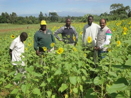 Bidco looking for farmers to grow sunflower and soya beans