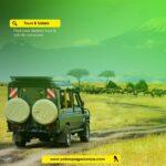 Tours and safari
